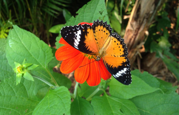 Banteay Srey Butterfly Centre - Angkor Focus Travel