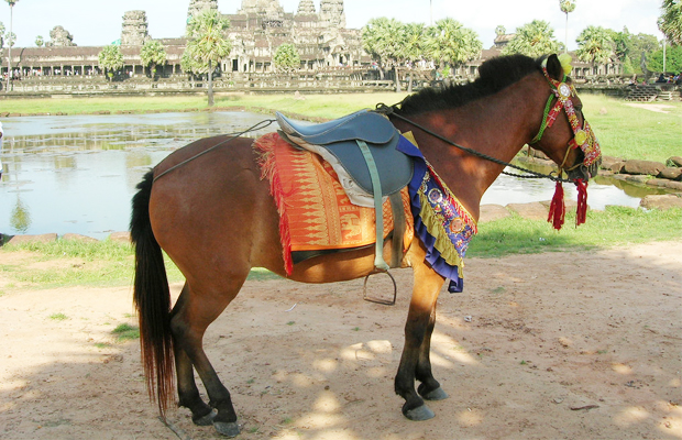 Horse for Rides at Angkor - Angkor Focus Travel