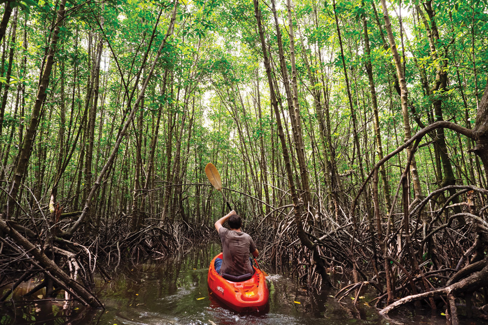 Koh Kong Introduction Mangrove Forest Koh Kong - Angkor Focus Travel