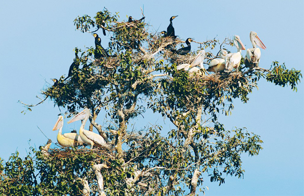 Prek Toal - Bird Sanctuary - Angkor Focus Travel