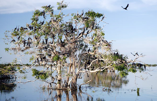 Prek Toal Bird Sanctuary Tonle Sap - Angkor Focus Travel