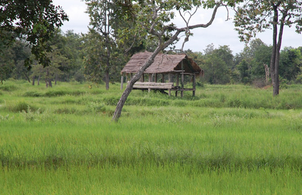 Rice Field On Road To Banteay Torp - Angkor Focus Travel