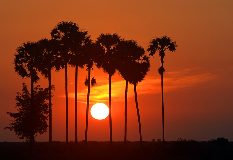 Siem Reap Weather & Climates Countryside Sunset