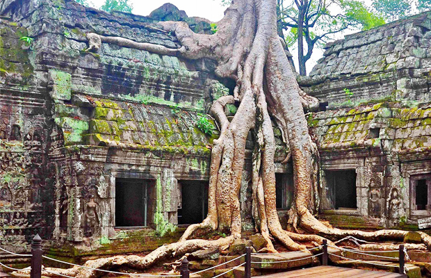 Ta Prohm Temple Daily Tours - Angkor Focus Travel
