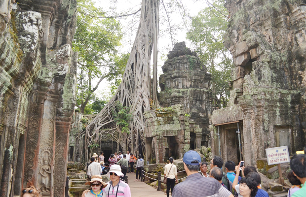 Ta Prohm Temple Group Day Trips - Angkor Focus Travel