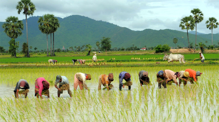 What to see in Kampong Chhnang Farmer Rice - Angkor Focus Travel