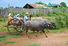 cambodia_country_side