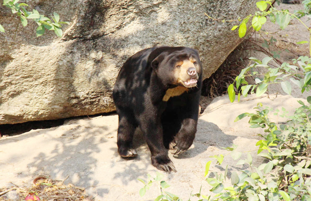 8 hours With Free The Bears at Phnom Tamao