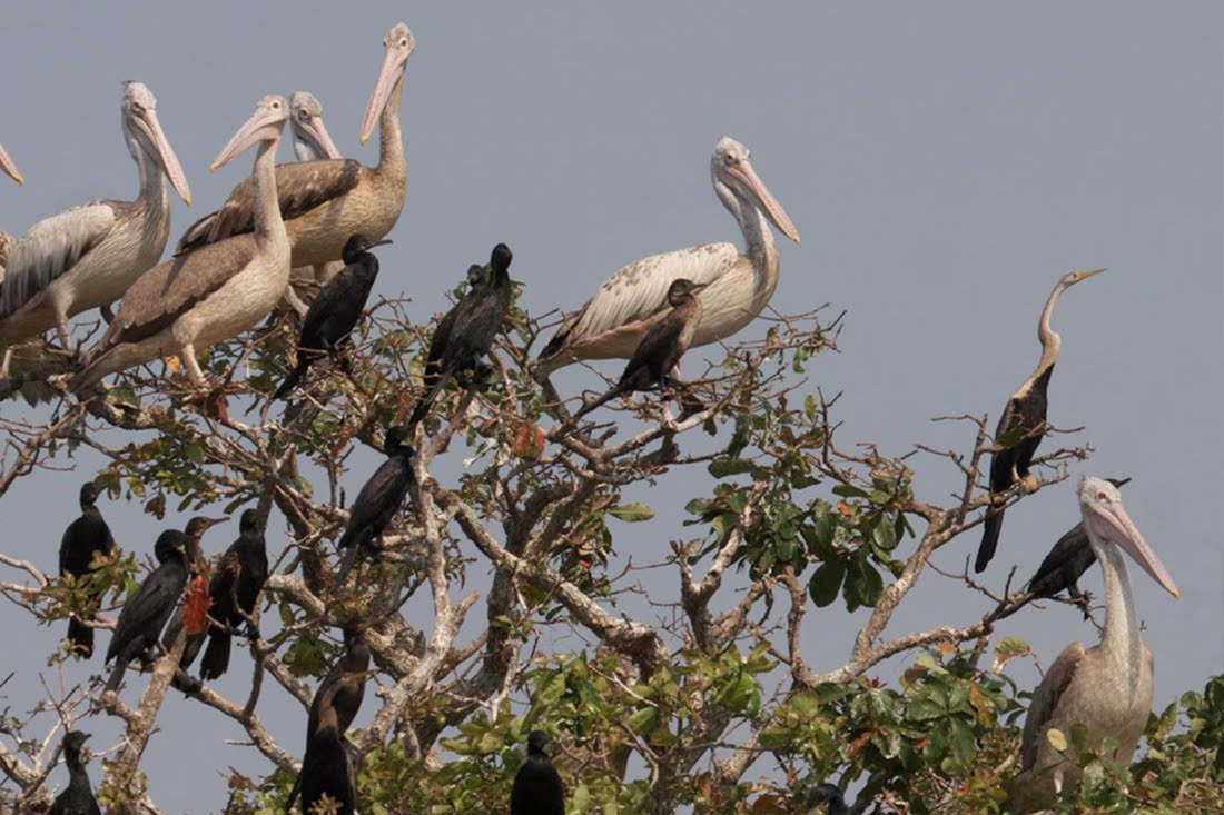 Siem Reap Bird Watch Tours + Boat Trips