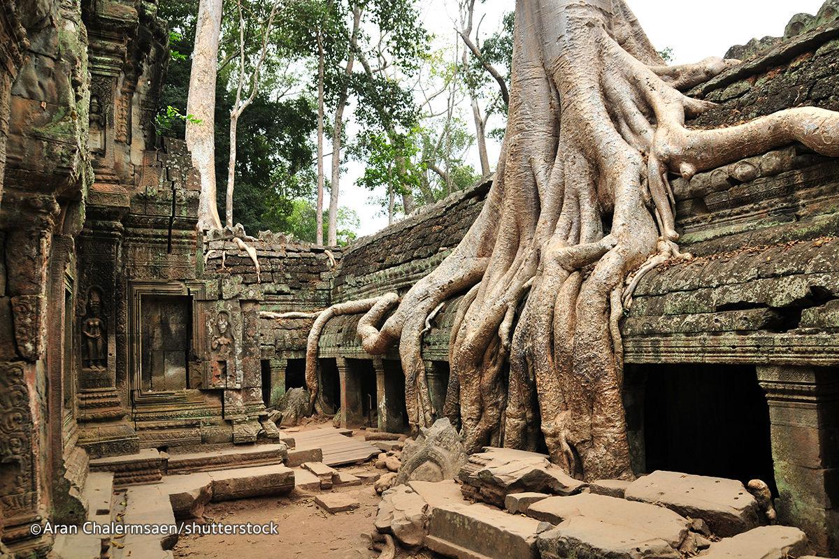 Ta Promh Temple on Tree